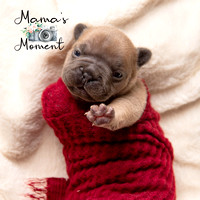 frenchie_puppies__MG_0390FB